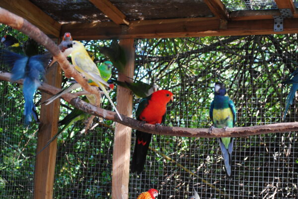 Papugi na dworze
