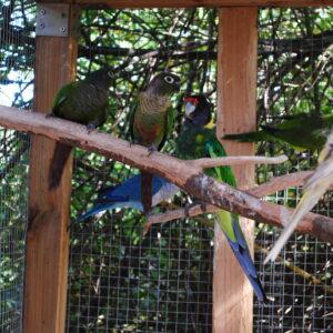 Karmienie papug