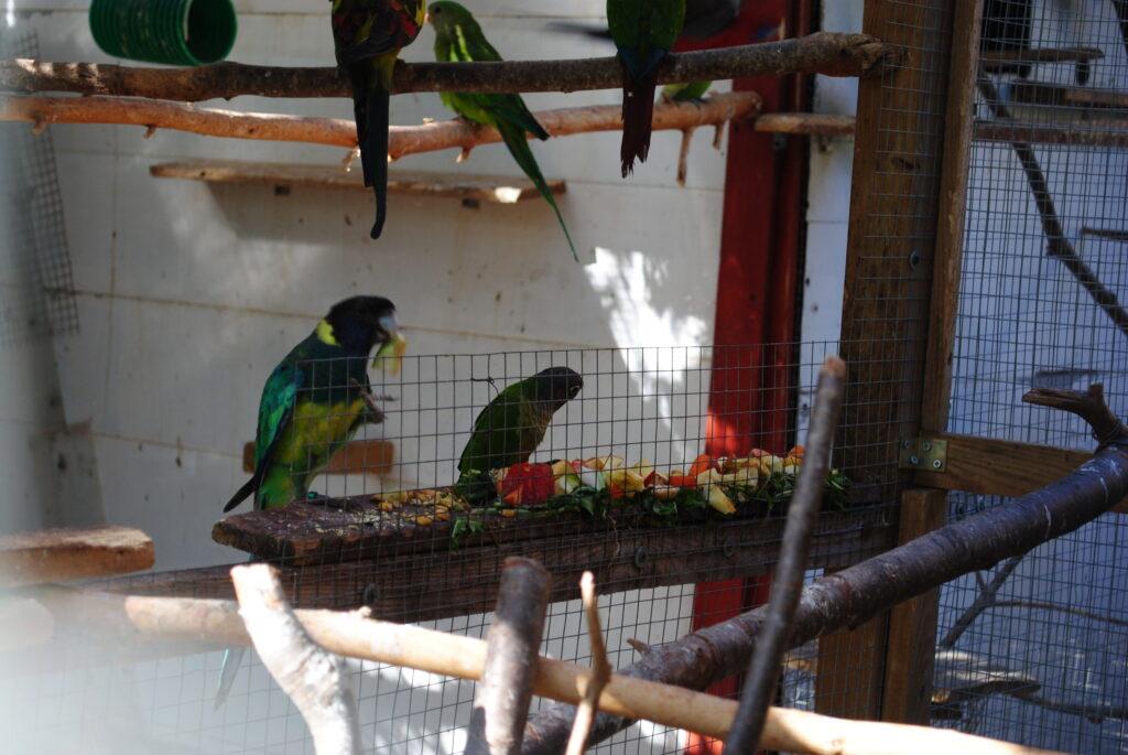 Woliery dla papug