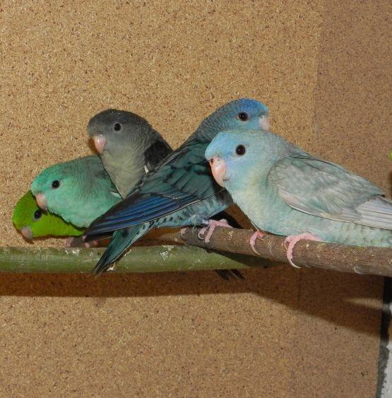 Karma dla papug małych