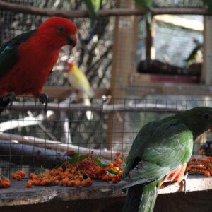 Owoce dla papug