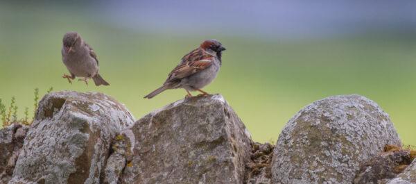 Karma dla dzikich ptaków