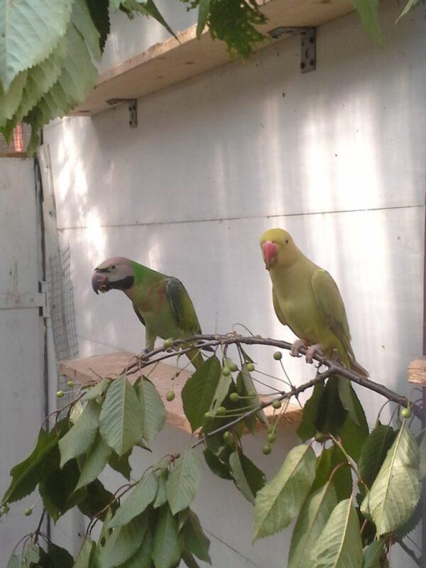 Dodatki dla papug