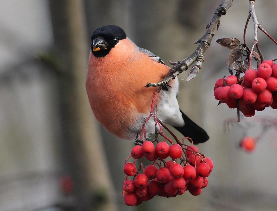 karma dla ptaków zimujących