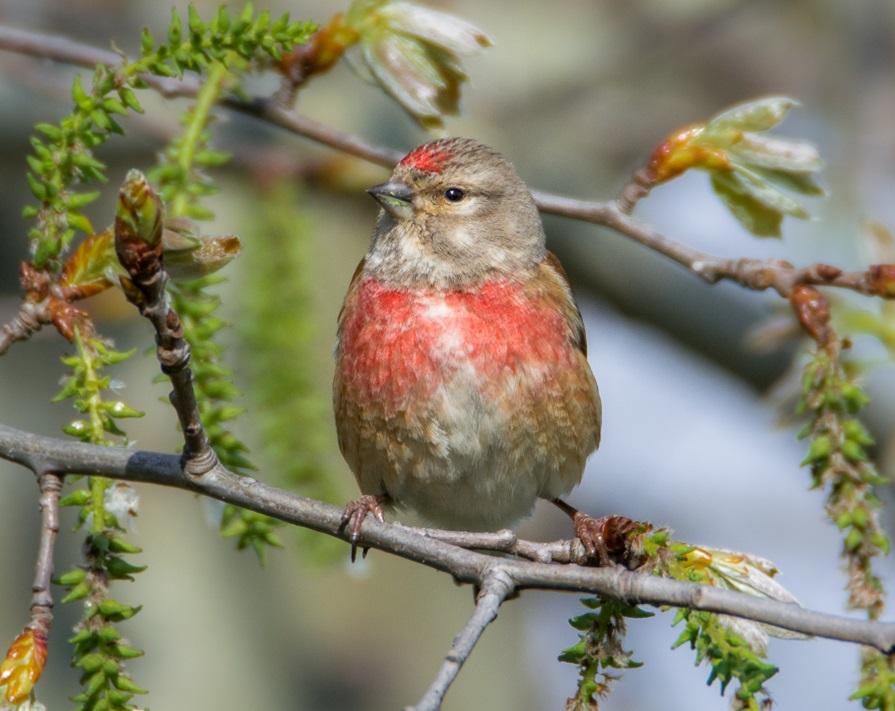 Karmienie ptaków zimą