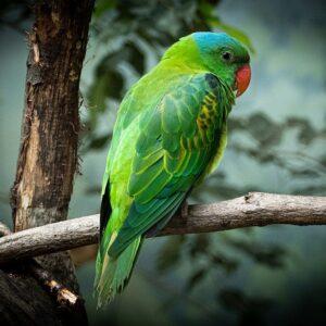 Kiełki dla papug