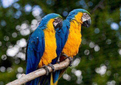 Czy Twoje papugi są legalne ?