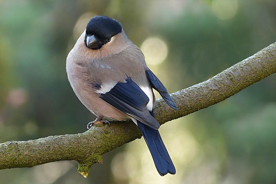 Karma dla ptaków dzikich