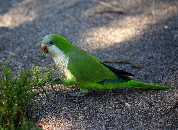 Karma dla papug średnich