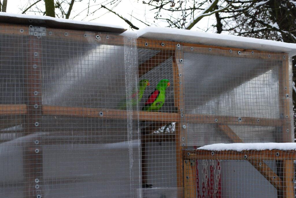 Papugi zimą na dworze