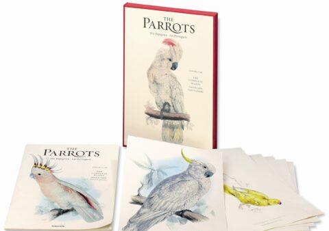Jak wyglądają papugi ?