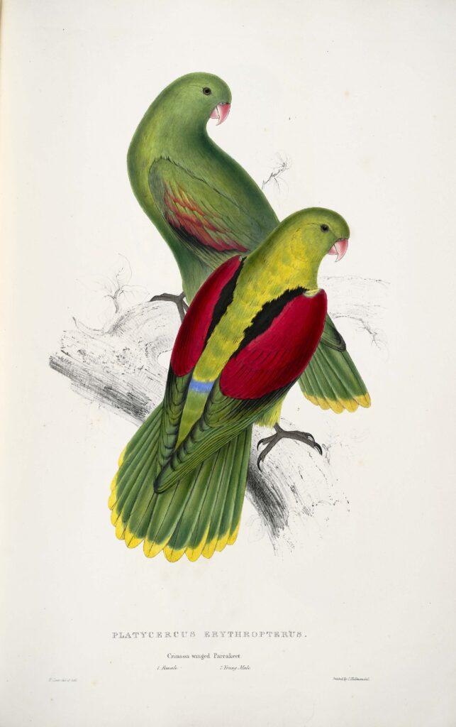 Polecana karma dla papug